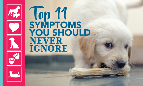 11 symptoms not to ignore