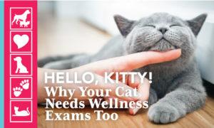 Indoor Wellness for Cats