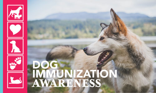 Immunization Awareness