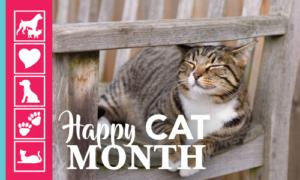 Happy Cat Month | Crossroads Animal Hospital