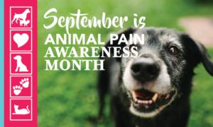 Animal Pain Awareness Month | Crossroads Animal Hospital