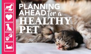 Pet Insurance Options | Crossroads Animal Hospital