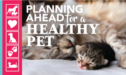 Pet Insurance Options | Crossroads Animal Hospital