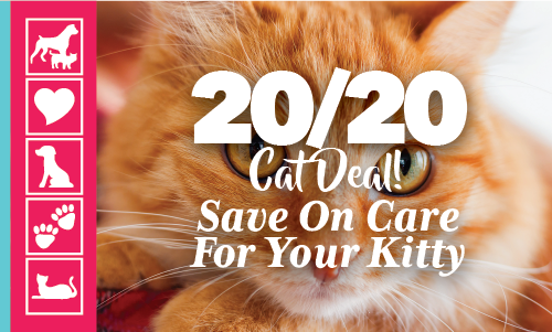 20/20 Cat Care Deal | Crossroads Animal Hospital