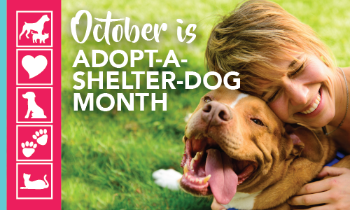 Adopt a Shelter Dog Month | Crossroads Animal Hospital