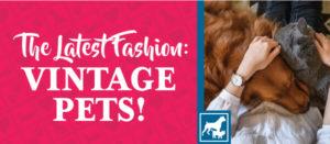 The Latest Fashion: Vintage Pets
