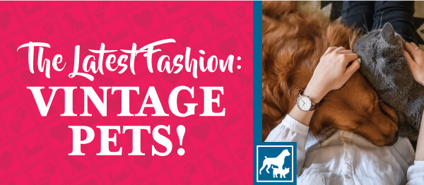 The Latest Fashion: Vintage Pets