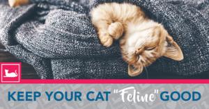 """Keep Your Cat """"Feline"""" Good!"""
