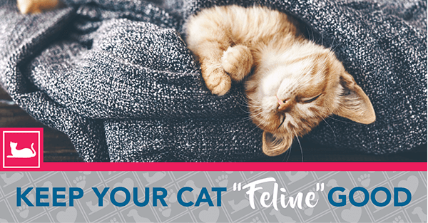 "Keep Your Cat ""Feline"" Good!"