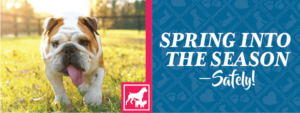 Spring into the Season—Safely!