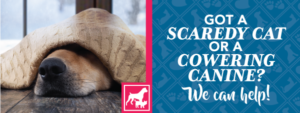 Got a scaredy cat or a cowering canine? We can help!
