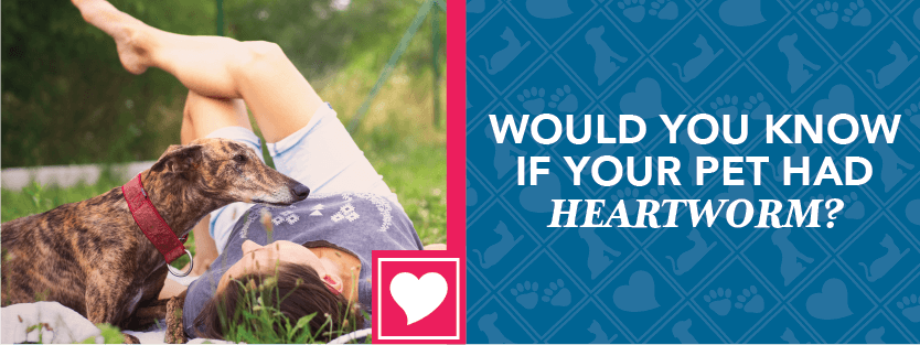Would You Know If Your Pet Had Heartworm?