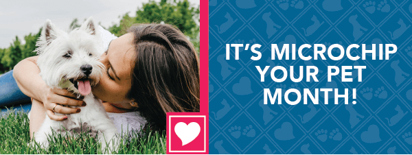 It's Microchip Your Pet Month