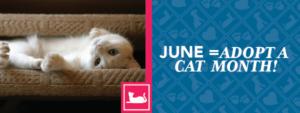 June = Adopt a Cat Month!