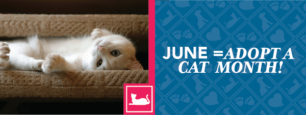 June = Adopt a Cat Month!