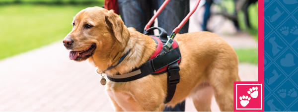 National Service Dog Month
