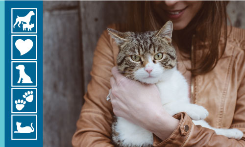 Want Your Pet to Live Longer? Here's How