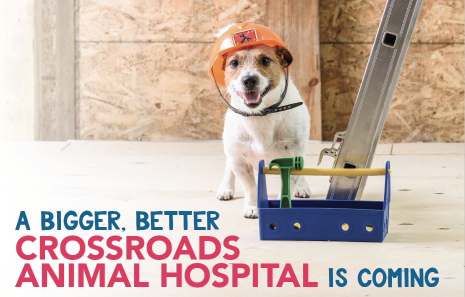Construction Updates - Crossroads Animal Hospital